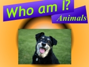 Who am I ? Animals. http://www.crookedalley.com Loading www.KnickKnackGames.com ABDEF http://www.knickknackgames.com Time:  1:00:00 750 Pts....